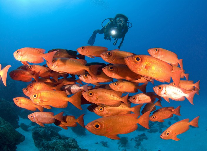 Palau Islands Offer Unparalleled Diving Opportunities