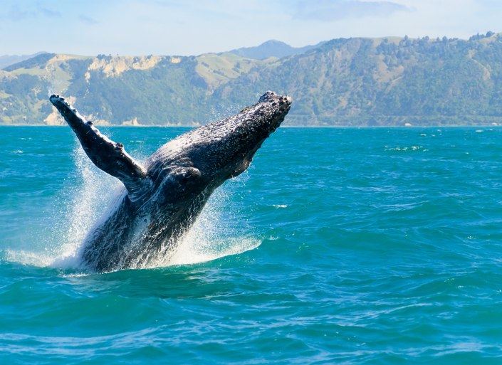 Where to Whale Watch in New Zealand