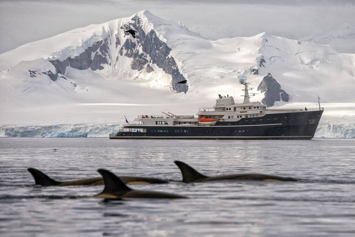 dolphins swim alongside superyacht LEGEND in the snow-covered and icy region of Antarctica