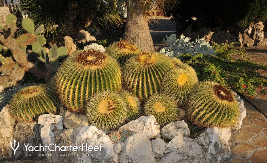 Cacti in Jardin Exotique