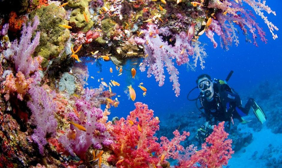 10 Top Dive Sites in Indonesia