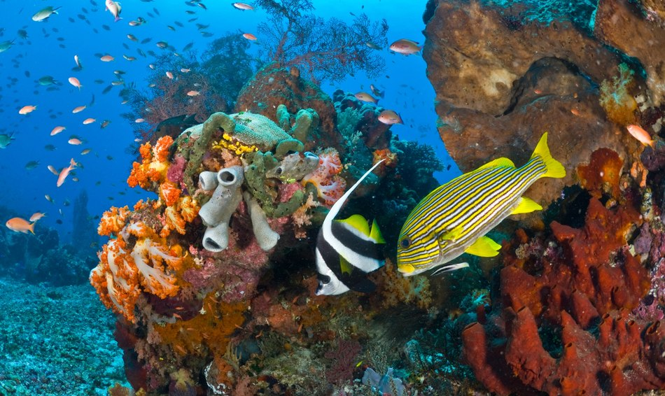 10 Top Dive Sites in Indonesia Image 1