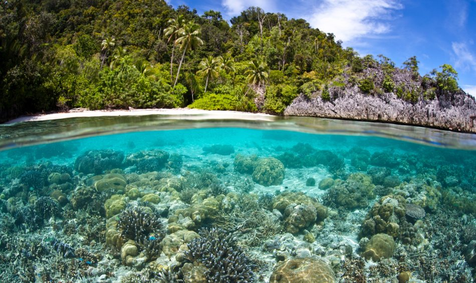 10 Top Dive Sites in the Pacific Image 1